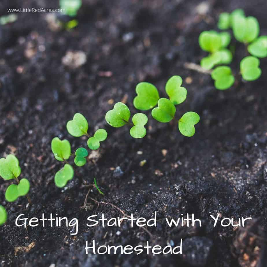 Getting Started with Your Homestead - Little green sprouts